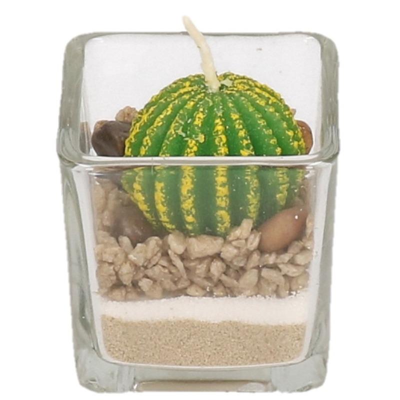 Bolcactus kaars in glas
