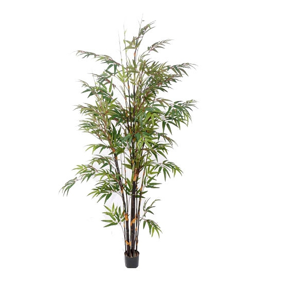 Grote bamboe plant 190 cm