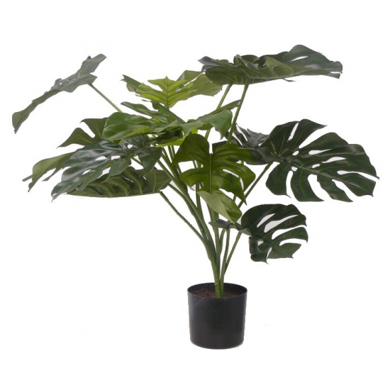 Kantoorplant Monstera 85 cm
