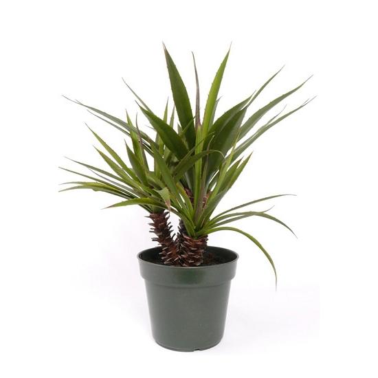 Kunst yucca kamerplant 71 cm