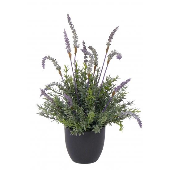 Lavendel plant in pot 38 cm