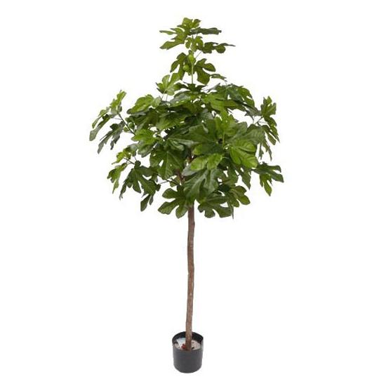 Luxe vijgenboom 120 cm
