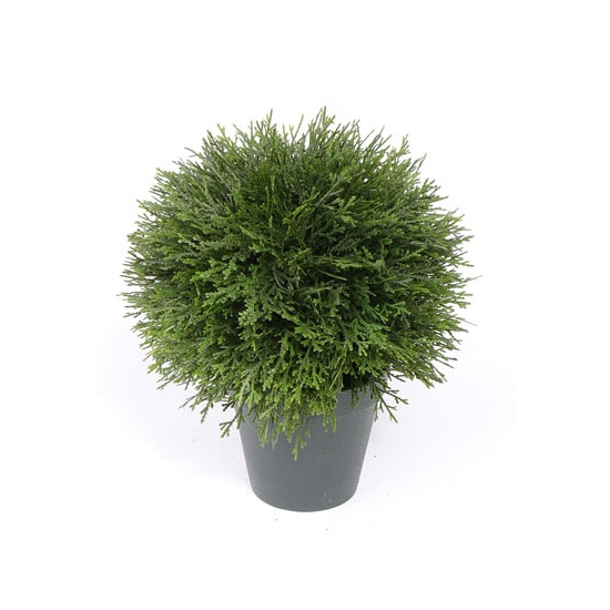 Namaak Cypress plant 25 cm