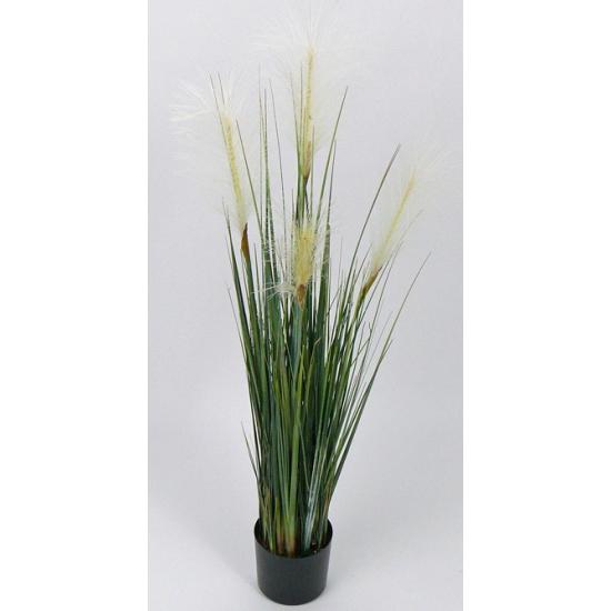Nep grasplant wild bloeiend 106 cm