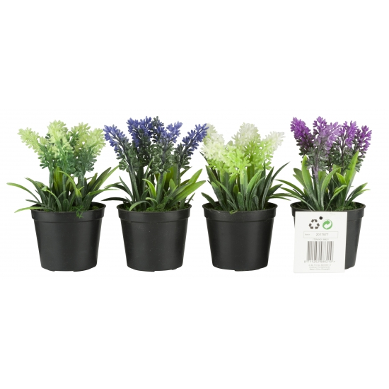 Nep planten lavendel wit 7, 5 x 16 cm