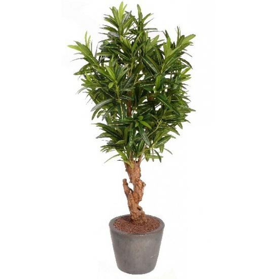Oleander struik met 840 bladeren