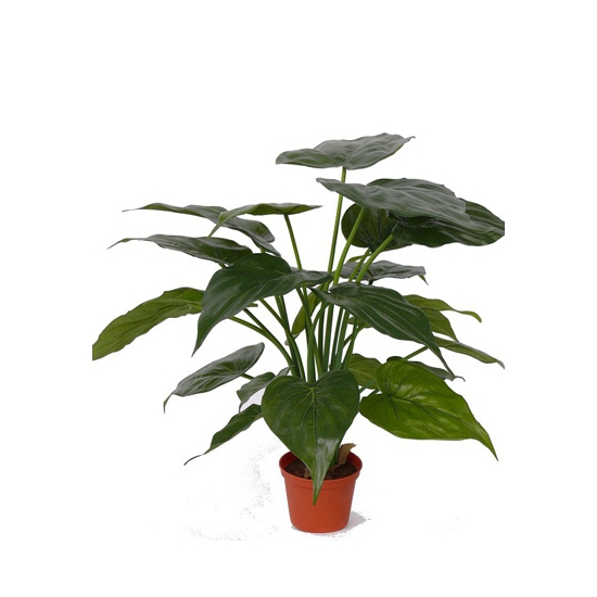 Olifantsoor kamerplant 16 bladeren