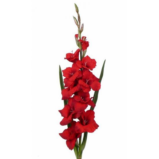 Rode gladiolen kunstbloem