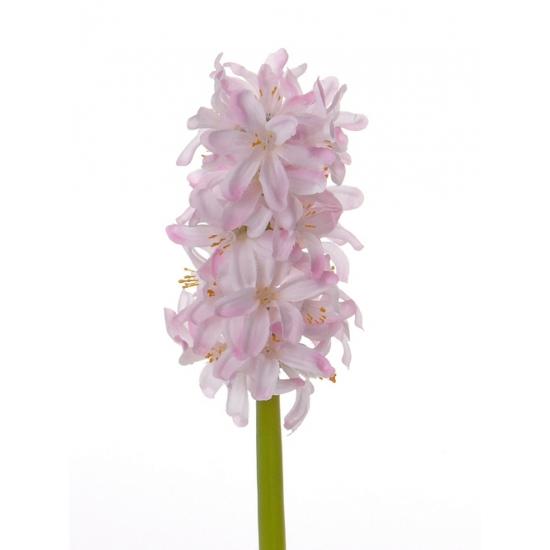 Roze kuntbloem hyacint