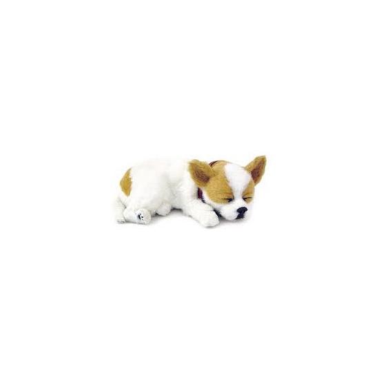 Slapende Chihuahua puppy