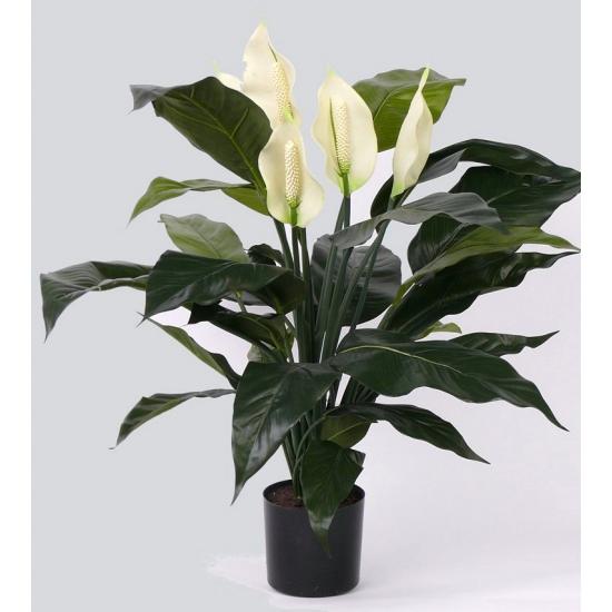 Spathiphyllum plant met 29 bladeren