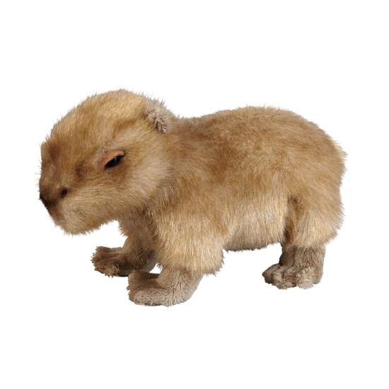 Speelgoed knuffel capibara 25 cm