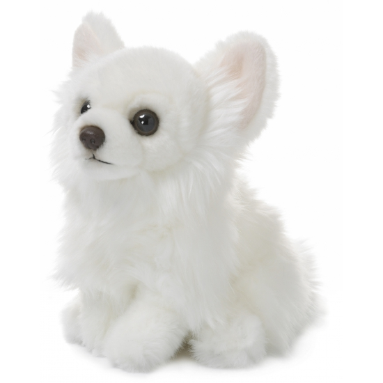 Witte Chihuahua knuffel 19 cm
