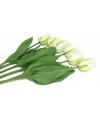 Bosje witte tulpen 48 cm