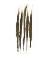 Goudfazant veren 50 cm 5 stuks