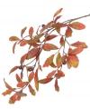 Herfsttak met eikenblad 67 cm