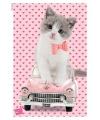 Kitten katten poster 61 x 91 5 cm