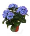 Kunst hortensia plant blauw 36 cm
