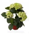 Kunst hortensia plant lichtgroen 36 cm