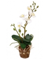 Kunst orchidee wit 32 cm