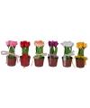 Kunstbloem tulpen in potje 18 cm