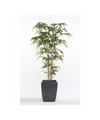 Kunstplant bamboe promo in pot 150 cm