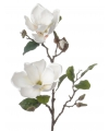 Magnolia tak wit 72 cm