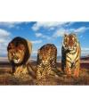 Poster wilde dieren katten 61 x 91 5 cm