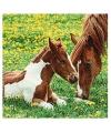 Servetten met paard en veulen 20 stuks