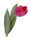 Tulp roze 48 cm