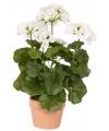 Witte kunst geranium 35 cm