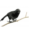 Zwarte raaf 18 cm