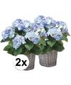 2x blauwe hortensia kunstplant in mand 45 cm