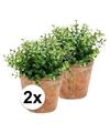 2x kunstplant eucalyptus groen in oude terracotta pot 20 cm