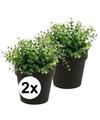 2x kunstplant eucalyptus groen in zwarte pot 20 cm
