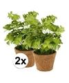2x kunstplant klavertje groen in pot 25 cm