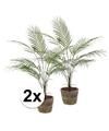 2x kunstplant palm groen in ronde terracotta pot 70 cm