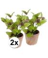 2x kunstplant salie kruiden groen in oude terracotta pot 25 cm