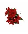 Bosje kerstster bloemen 30 cm