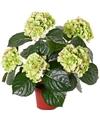 Kunst hortensia plant groen roze 36 cm