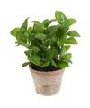 Kunstplant basilicum kruiden groen in oude terracotta pot 25 cm