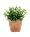 Kunstplant eucalyptus groen in oude terracotta pot 20 cm