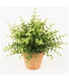 Kunstplant eucalyptus groen in terracotta pot 20 cm