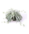 Kunstplant graslelie groen wit in pot 55 cm