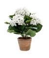 Kunstplant hortensia wit in oude ronde terracotta pot 37 cm