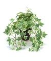 Kunstplant klimop groen wit in zwarte pot 30 cm