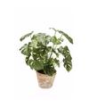 Kunstplant monstera in pot 50 cm