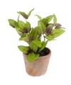 Kunstplant salie kruiden groen in oude terracotta pot 25 cm